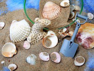 Das Mitbringen von Muscheln und anderen Lebewesen von den Malediven ist verboten