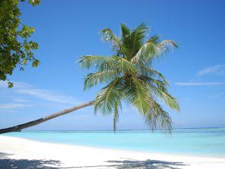 Palmenstrand auf den Malediven